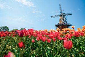 Windmill Island Gardens Tulips